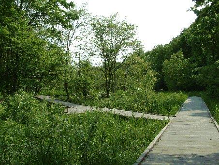 湿地の木道の写真