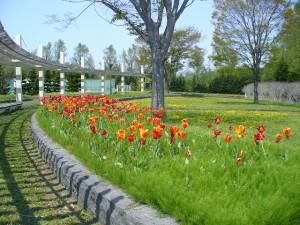 s-花の広場写真