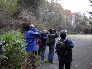 野鳥観察会を実施しました