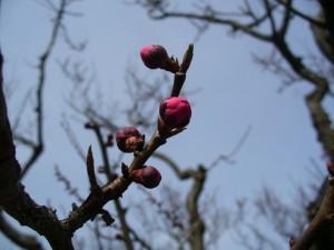 春の花たち3