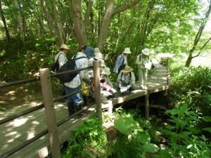 湿生植物観察ツアーを開催しました