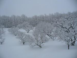 2012.12雪の梅林