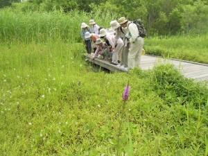人工湿地に行きました