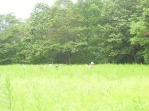 草原はいっていく_02