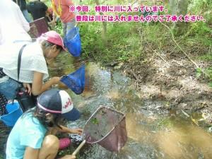 魚とり01
