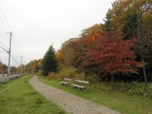 葉も実も赤いヤマボウシ、色づく山など~東地区から~