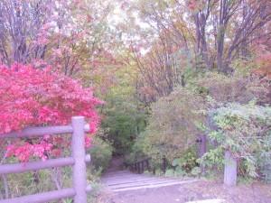 木道に降りる階段