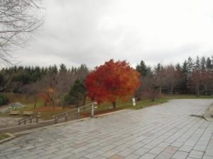 季節はずれの紅葉、その後。そして色鮮やかな豊平公園の展示。