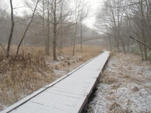 雪が降ってきました