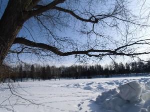 【他公園情報】雪像、キャンドル、花火、花、みどころたくさん。