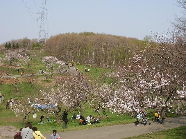 4/29梅林情報!!【10時現在】