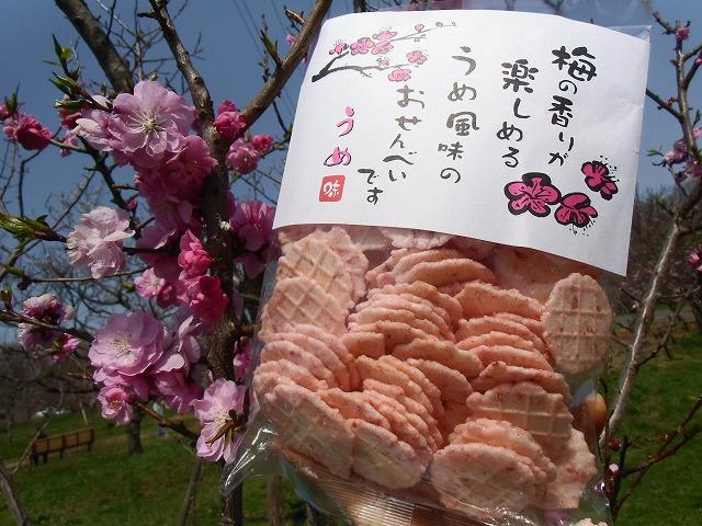 梅ほんぽ商品紹介(5月2日)