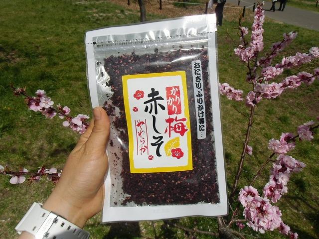 梅ほんぽ商品紹介(5月7日)