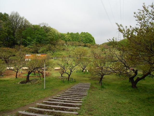5/13梅林情報!