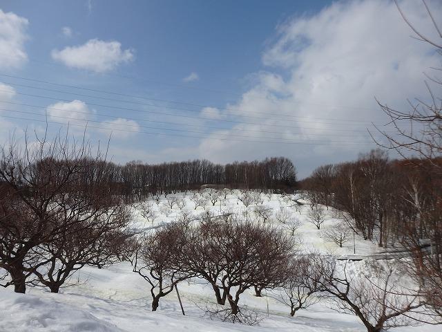 3/14てくてく冬さんぽ④