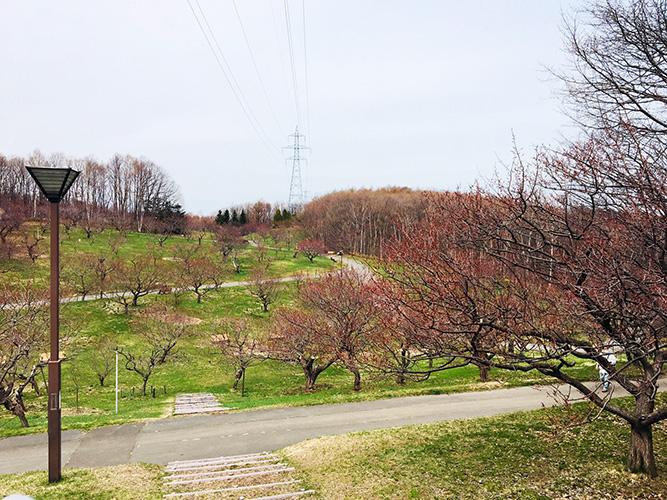 平岡公園梅林全景