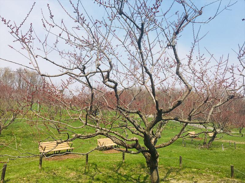 紅梅基準木の全景