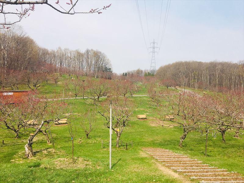 4月28日の梅林の全景