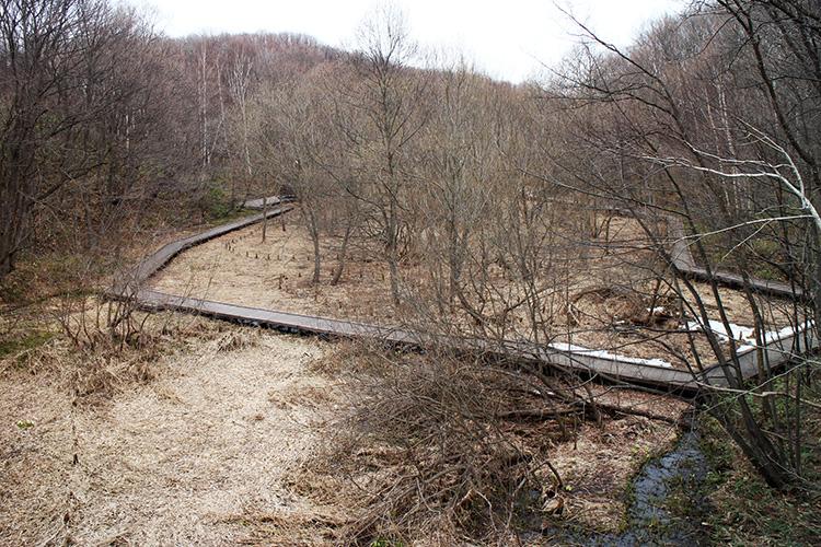 梅の香橋から見た木道