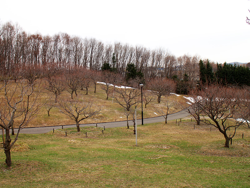 平岡公園梅林の様子