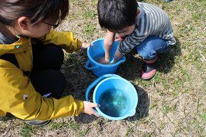 カエルの卵を触るために手を冷やしている様子