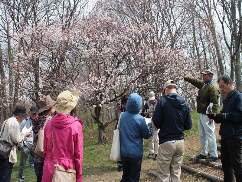 梅林ツアーで開花した白梅を見る参加者