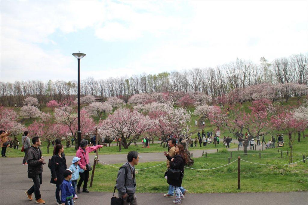 平岡公園ウメの様子(5月4日)