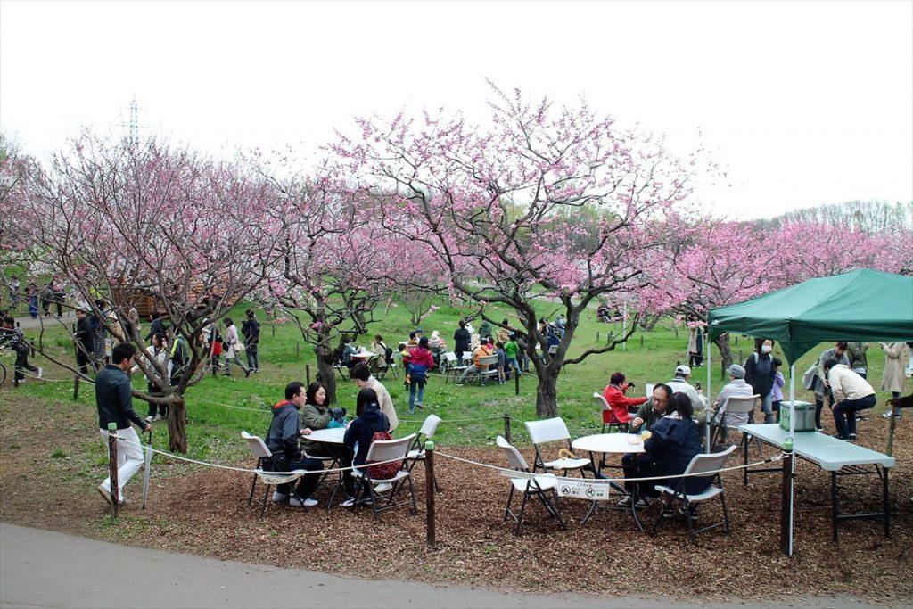 平岡公園ウメの様子(5月6日)