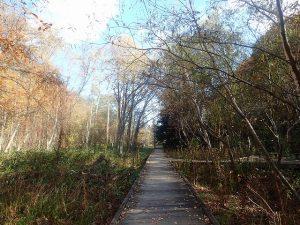 上流湿地木道