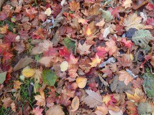 色んな落ち葉
