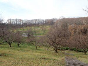 今日の平岡公園(11月24日)