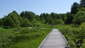 晴れた日の人工湿地