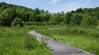 晴れた日の平岡公園人工湿地