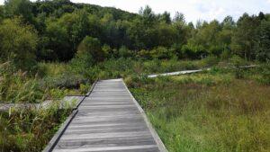 人工湿地木道