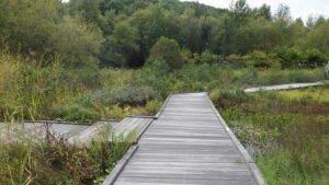 人工湿地の木道