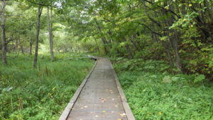 上流湿地の木道