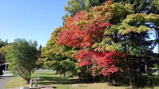 今日の平岡公園(10月14日)