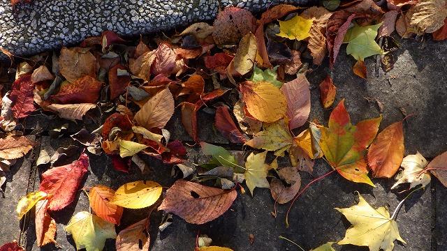カラフルな落ち葉